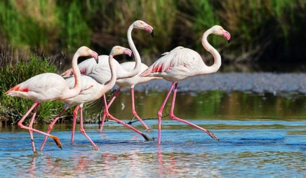 Visit Al Wathba Wetland Reserve