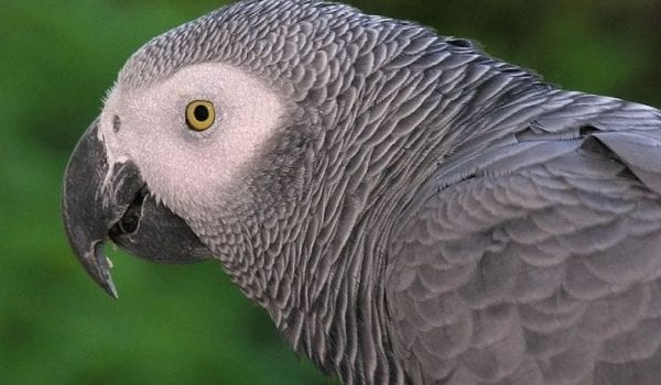 Parrot Power!!